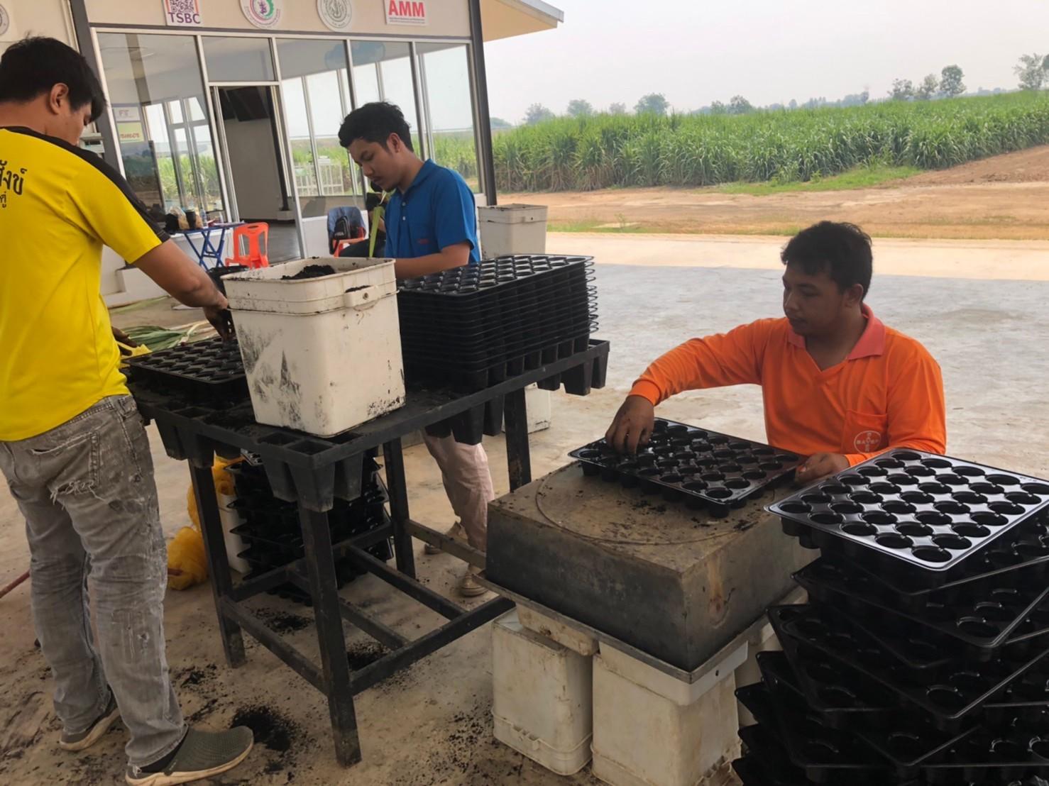 เมื่อวันที่ 4 เมษายน 2563 ที่ผ่านมา ทีมงานทดสอบโรคแส่ดำได้เข้าทดสอบโรค ณ ศูนย์การปรับปรุงพันธุ์อ้อยแห่งประเทศไทย (Thailand Sugarcane Breeding Center)