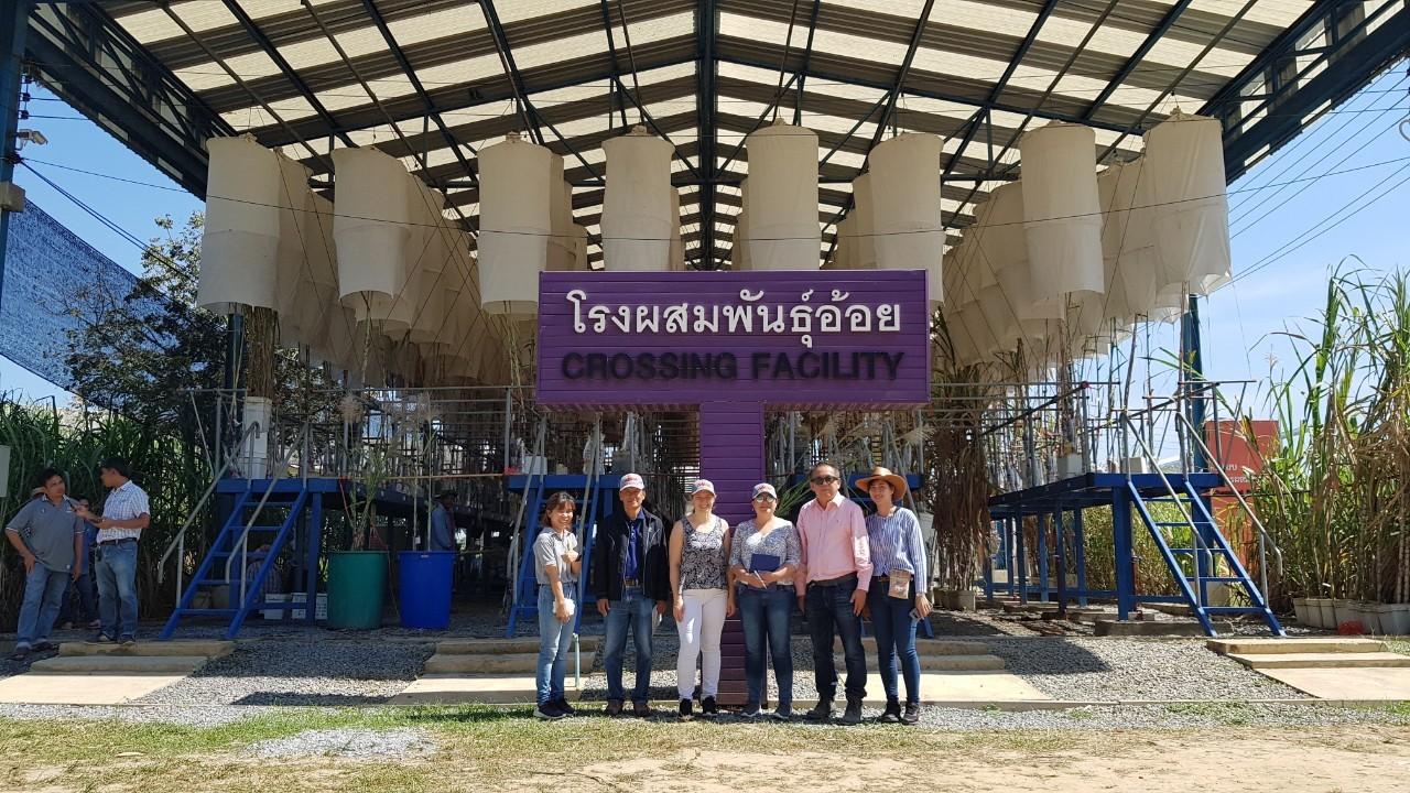 ระหว่างวันที่ 23-30 พฤศจิกายน 2562 สถาบันเทคโนโลยีการเกษตร อาร์เจนติน่า เข้าศึกษาดูงาน ด้าน  Genetic Variability of Sugar cane for Bioenergy ณ ศูนย์การปรับปรุงพันธุ์อ้อยแห่งประเทศไทย (TSBC)